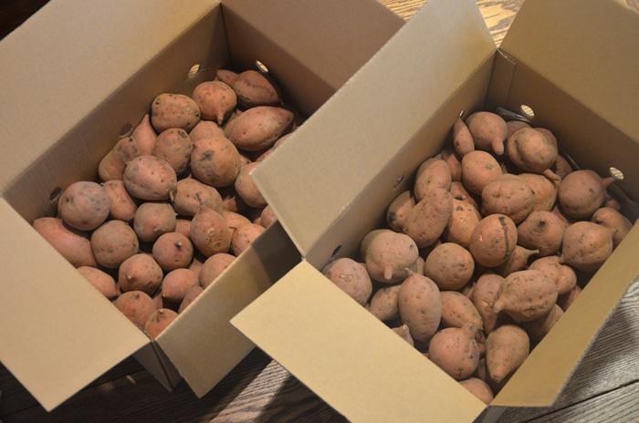 安納芋5キロ×2箱