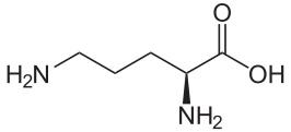 オルニチン構造式