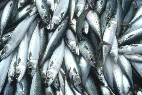 青魚の油に含まれるDHA