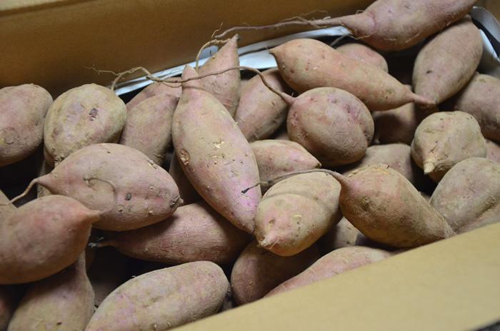 種子島の農家直送「安納芋」SSサイズ5キロ