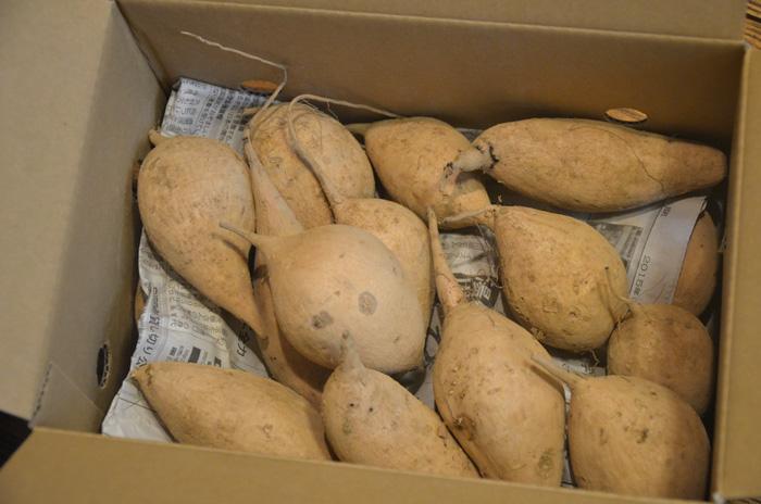 種子島産の紫芋「種子島ゴールド」3キロ